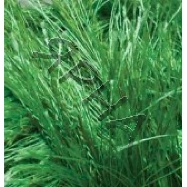 Пряжа Декофур Alize (Ализе) #    595 [зеленая трава]
