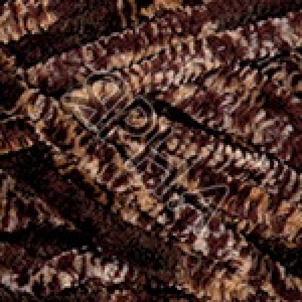 Yarn Dolce YarnArt (РАМ) #    804 [коричн меланж]