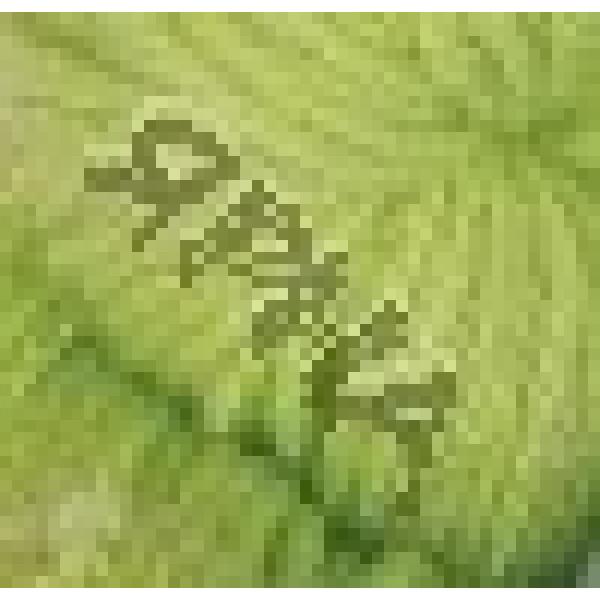 Пон пон Картопу #    439 [зелень]